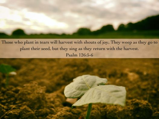 Planting with tears